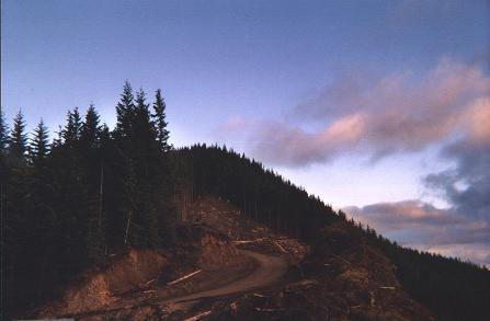 Rogers Peak at sunset
